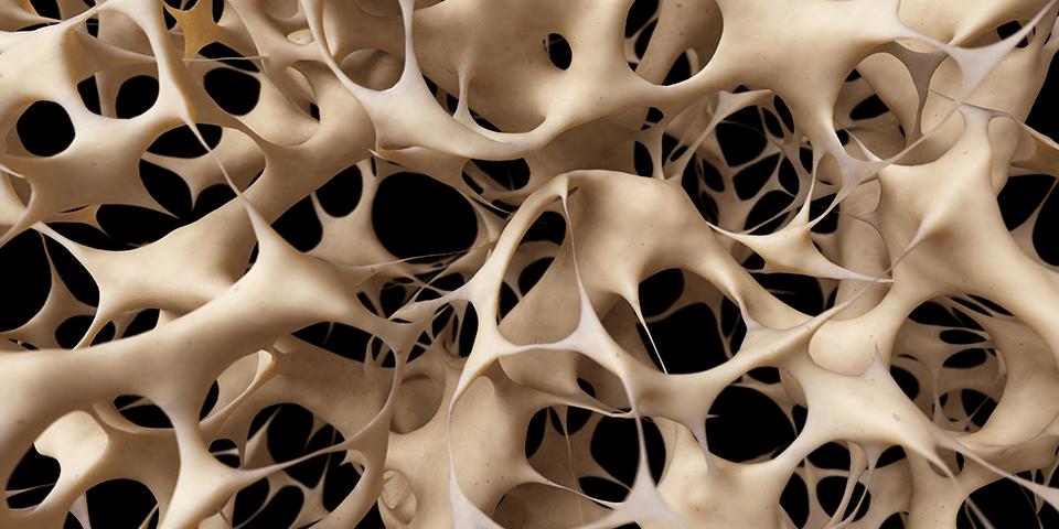 Tulang Mikroskopis
