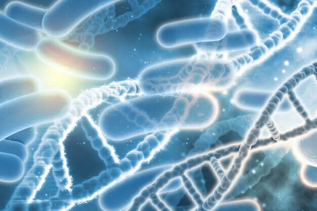 DNA bakteri