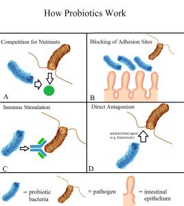 Manfaat Pemberian Probiotik