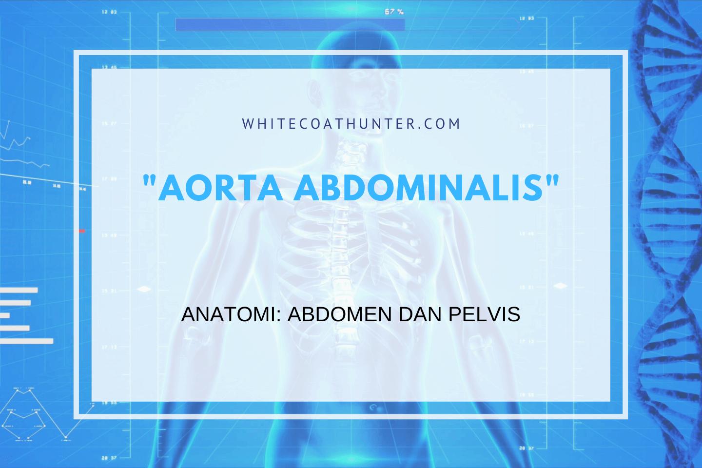 Featured Image Aorta Abdominalis