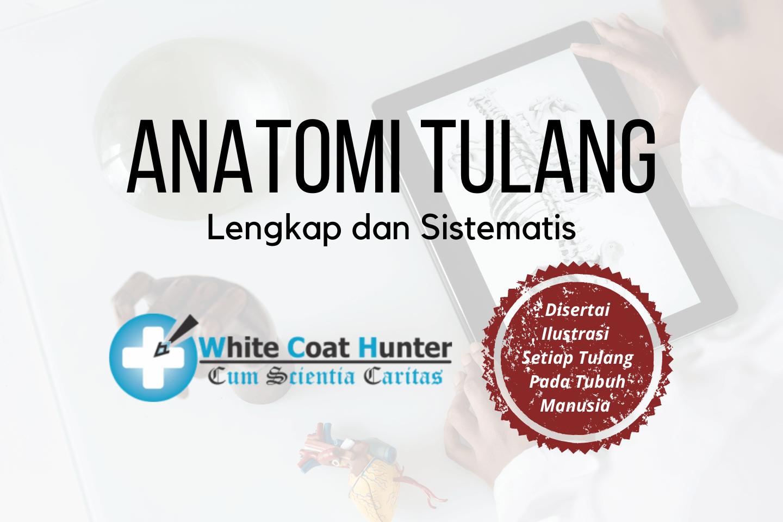 Featured Image Anatomi Tulang Manusia
