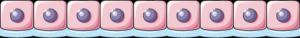 Epitel cuboid simplex
