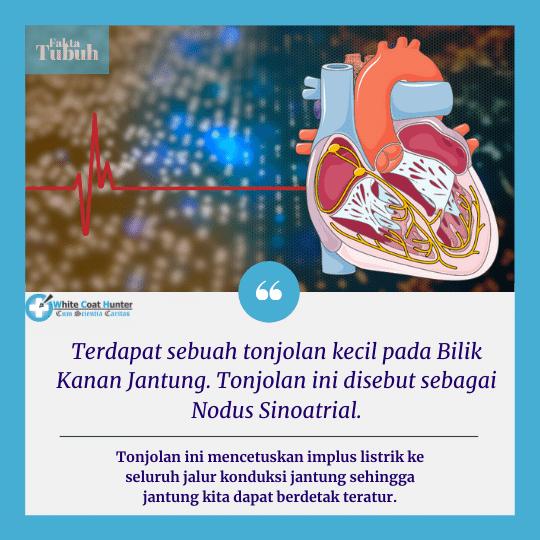 Fakta Seputar Elektrofisiologi Jantung