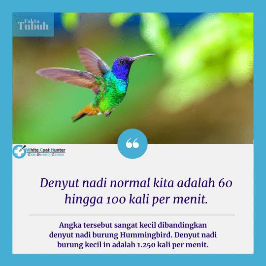 Denyut Jantung Kita lebih Lambat dibanding burung Kolibri